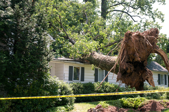 Emergency Tree Removal Fayetteville AR